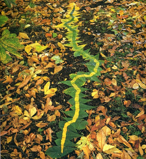 goldsworthy-greentoyellowleaves